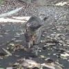 ◆濡れネズミ