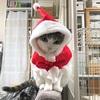クリスマスの食卓とサンタ猫