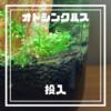 メダカ・ボトリウム・プロジェクト(MBP)⑤【ボトル内をキレイにしてくれる『オトシンクルス』を混泳飼育する】