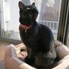 黒猫ランウェイ