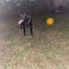 大好きなボール