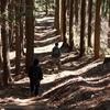 陣馬山・高尾山縦走してみた。