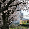 サクランピック2020 in OOGAKI-SHIGA EF64形1000番台・国鉄色 EF210形300番台