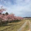 千本桜満開です♡