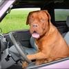 暮らしの中で愛犬を危険にさらさない為に考えていること