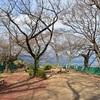 石清水八幡宮の展望台から見た京都市内。