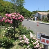 冠山総合公園・春のばら祭(1)祭の風景(山口県光市室積村)