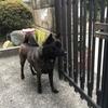 甲斐犬サンの自宅警備‼︎わんわんお٩( 'ω' )و!