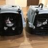 猫猫強化週間~通院とクロちゃん家猫化計画~