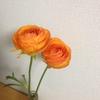 春におすすめの花