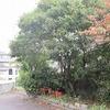 秋分の日 彼岸の中日にヒガンバナが咲いています