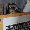 テレワークなのか出勤なのか?飼い主在宅で戸惑う猫たちの反応