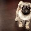 「犬を飼ったら部屋が臭い!」問題への対処法