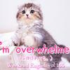 【週末英語#145】覚えておくと便利な「I'm overwhelmed.」感情や力で圧倒された状態を伝える