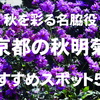 秋を彩る名脇役、京都の秋明菊(シュウメイギク)おすすめスポット5選
