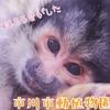 【ちょこっと動物園#6】リスザルはアイドル【市川市動植物園】