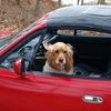 楽しいドライブ!酔いやすい犬はクレートやキャリーで乗車しよう