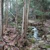 千丈寺山へのハイキング(その1)登山道前半