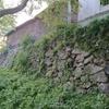 今日の犬山城は…『蝉、復活❗』