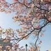 shizuku cafe と花の道