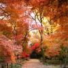 """秋の風景は""""昭和""""から変わらず〜11月5日(木)『ふじやまワールドミュージック』"""