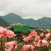 新緑の信州旅行:ちょうど見頃と聞いて、さかき千曲川バラ公園へ