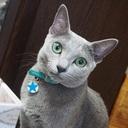 愛猫ロシアンブルー♂と独女のふたりぐらし
