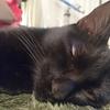 猫の寝る姿の破壊力!