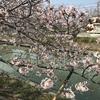 【桜の撮影】スマホで簡単にきれいな写真を撮る2つの方法!!!