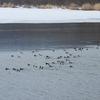 網走湖一部解氷 元気ざくらの満開はまだまだ先 色々