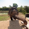 朝食中に、象がやってくるリゾート The Beige@カンボジア