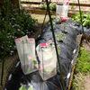 野菜苗 防寒対策