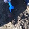 さつまいも掘り掘りしましたの巻