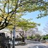 🌸谷中霊園で桜と新緑を撮影しました🍃