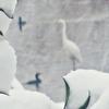 大雪の1日の記録 画像クイズ「シラサギを探せ」画像多め