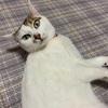【臆病な猫】日々の生活と私の体験談㉑!!