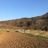 急ピッチで畑仕事。