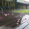 ツツジの落花 半袖 フラワーフェスティバル