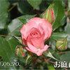 浪漫がある!2011/05/20