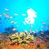 ♪オールドリフトダイビング♪〜沖縄ダイビング・アドバンスドオープンウォーターダイバー〜