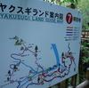 JALマイルで行く屋久島④~ヤクスギランドで初トレッキング。体力ない方、トレッキング初心者向けです。