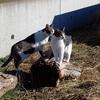 目立てが巧く出来なくなった?のでファイルホルダーガイドを購入 市有林 猫散歩