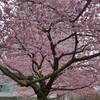 外出制限で、バンクーバーの春をかみしめる&学校のオンライン化、始まる