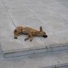 ハバナの野良犬|キューバ一人旅その8