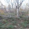 あづま開パ跡地のメガソーラー用地、木の伐採が進み景観が大きく変わっています