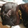 今日の黒猫モモ&白黒猫ナナの動画ー969