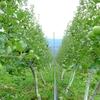 シナノリップの収穫など。