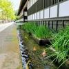 山陰の小京都、津和野を巡る