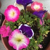 花が増えてきたよ😄