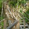 2010年 70mもの高さを誇るアメリカ大陸最大の遺跡 ティカル